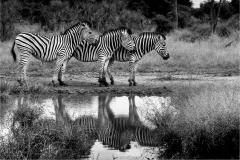 Monochrome winner - Stripes  ©Theuns Olivier