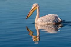 Senior and Evening winner - Floating - ©Pieter-Swart