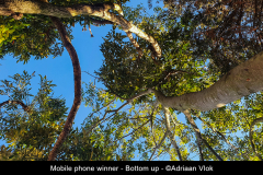 Selfoonwenner-Bottom-up-©Adriaan-Vlok