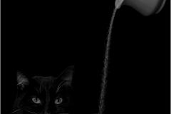 Set Subject and Senior winner - Sugar Cat - ©Theuns-Olivier