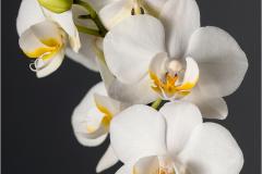 Orchid Pose ©AdriaanVlok - Set Subject Winner